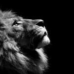 """<span itemprop=""""name"""">Lion</span>"""